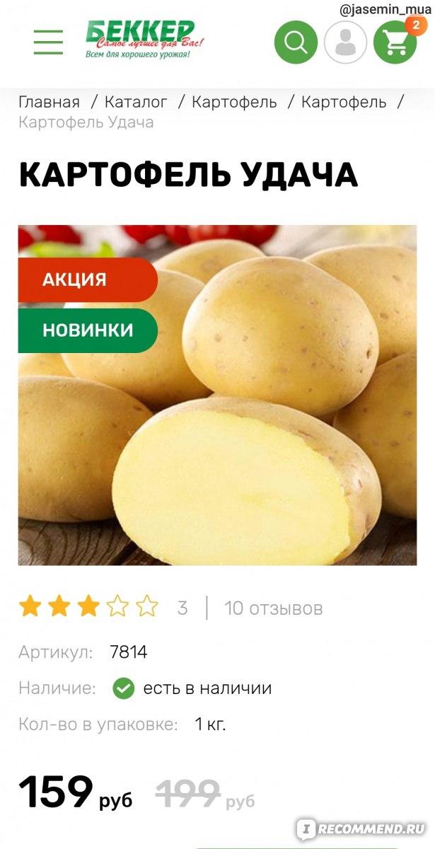 семена картофеля удача купить в спб медовое